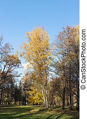 autunno, parco, albero