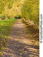autunno, parco, corsia