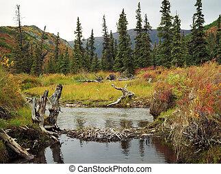 autunno, parco nazionale, alaska, denali