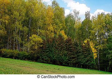autunno, parco, paesaggio, albero