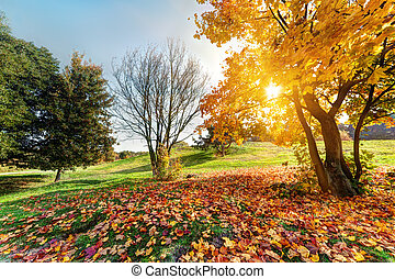autunno, parco, paesaggio, cadere