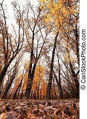 autunno, parco, strada