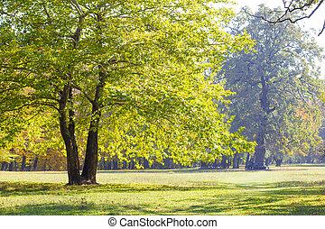 autunno, park., albero