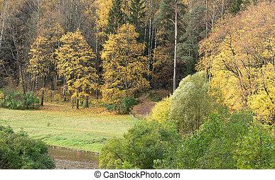 autunno, park., paesaggio
