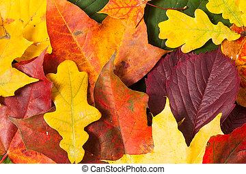 autunno parte, carta da parati