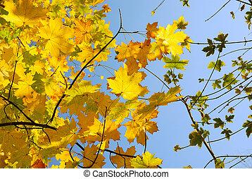 autunno parte, contro, il, cielo blu