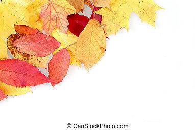 autunno parte, cornice, giallo, rosso