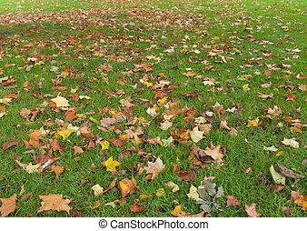 autunno parte, erba