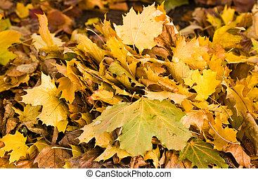 autunno parte, giallo, mazzo