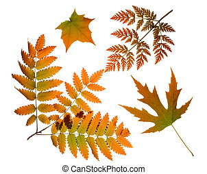 autunno parte, isolato