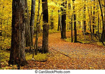 autunno, passeggiata, modo