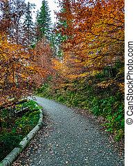 autunno, percorso, foresta