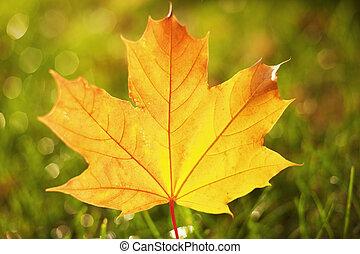 autunno, primo piano, foglia