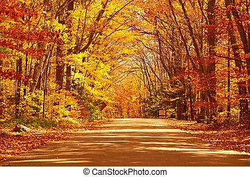 autunno, scena, con, strada