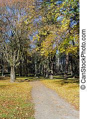autunno, scena, in, uno, parco città