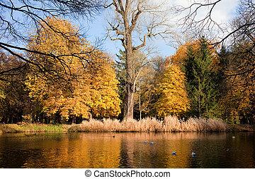 autunno, scenario, parco,  lazienki