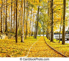 autunno, sentiero, lago