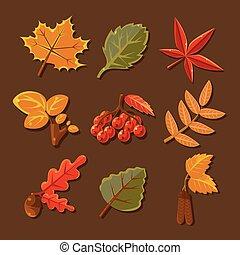 autunno, set, vettore, leaves., colorito