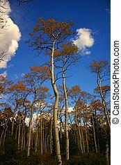 autunno, shavano