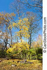 autunno, soleggiato, paesaggio