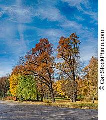 autunno, soleggiato, parco