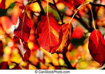autunno, stagionale, carta da parati