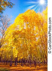 autunno, stagionale, natura