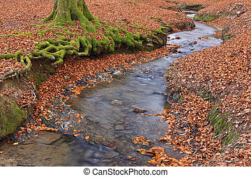 autunno, stagione, colori