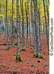 autunno, stagione, colori, cadere