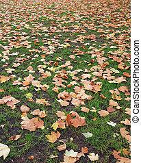 autunno, stagione, foresta, cadere
