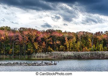 autunno, su, uno, baia chesapeake, lago