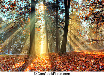 autunno, tardi, foresta, sunrays, mattina