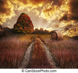 autunno, tramonto, colorito