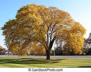 autunno, vecchio albero