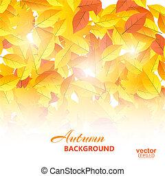 autunno, vettore, illustration., fondo, leaves.