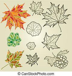 autunno, vettore, set, mette foglie