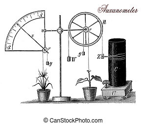 Auxanometer, vintage illustration