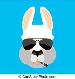 avatar., lama, alpaka, emoji., zigarre, strict., abbildung, gesicht, tier, vektor, tier, ernst, qualmende , kühl