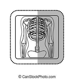 avbild, skelett, mänsklig, ikon