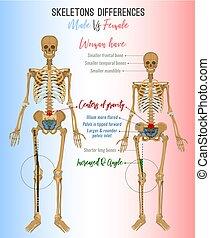 avbild, skillnader, skelett
