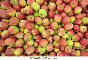 avdelning, lagring, äpplen