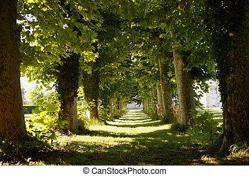avenida, árboles