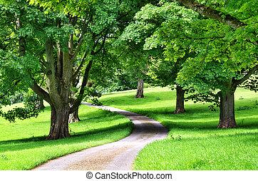 avenida, de, árvores, com, um, estrada, enrolamento, através