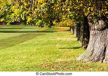 avenida, de, dorado, árboles de otoño