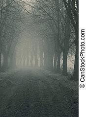 avenida, em, nevoeiro