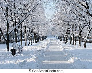 avenida, nevoso
