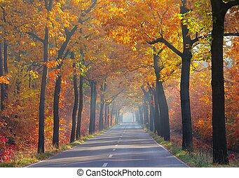 avenida, otoño