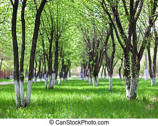 avenida, primavera