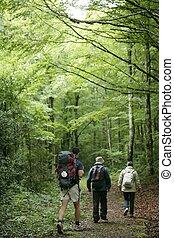 aventura, excursionismo, en, haya, bosque, de, pirineos