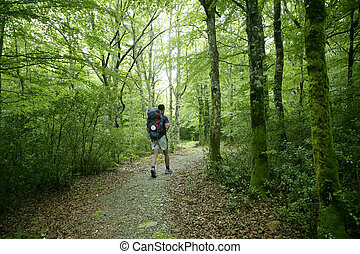 aventura, hiking, ligado, faia, floresta, de, pyrenees